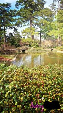 audrey-japanese-garden-bridge-2-2017_ink_li