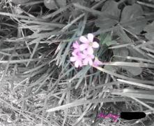 audrey-japanese-garden-flower-2-2017_ink_li