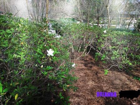 brianna-japanese-garden-flower-2-2017_ink_li