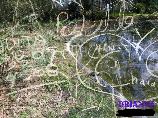 brianna-japanese-garden-turtle-2-2017_ink_li
