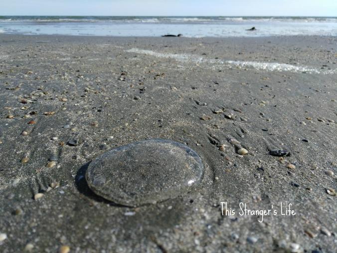 jellyfish blog photo.jpg