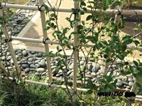 mavrizio-japanese-garden-rocks-2017_ink_li