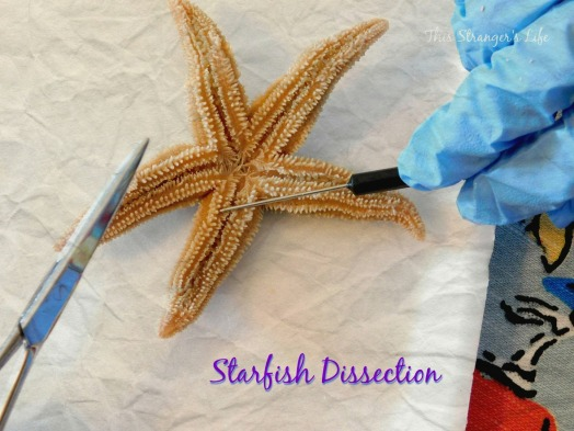Cover Starfish
